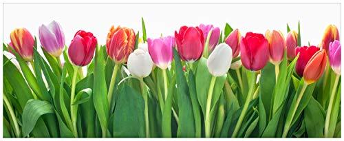 Wallario Acrylglasbild XXL Rote weiße und Pinke Tulpen im Frühling - 80 x 200 cm in Premium-Qualität: Brillante Farben, freischwebende Optik