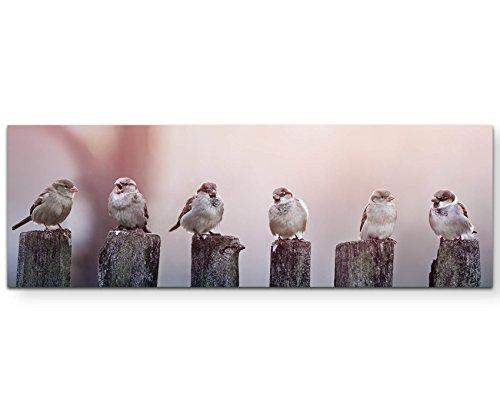 Paul Sinus Art Leinwandbilder | Bilder Leinwand 120x40cm Spatzen auf Einem Holzzaun -