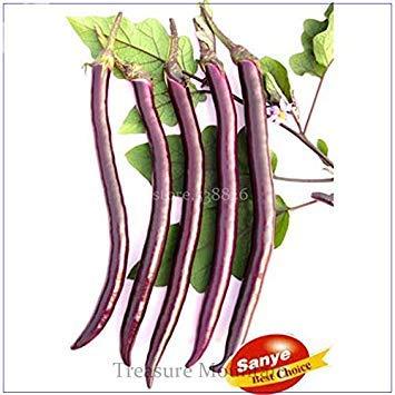 Pinkdose® 2018 Heißer Verkauf Hangzhou Lila Rot Auberginen Samen, 100 Samen, Einfache Packung, Frühe Reife Hybrid F1 TS202T
