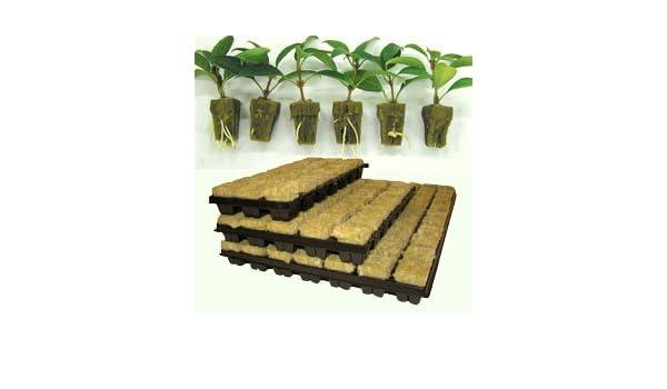/48/Tablett Wachstum Technologie 2,5/cm Rockwool/