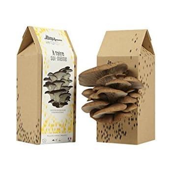 La Boite à Champignons à Faire soi-même - Kit culture de champignons- Pleurotes Monte Cristo