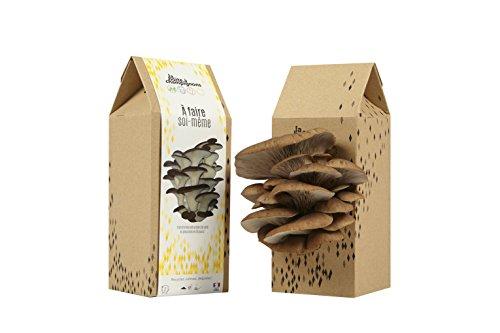 la-boite-champignons-faire-soi-mme-kit-culture-de-champignons-pleurotes-monte-cristo