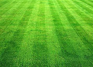 200pcs / bag Turf semi di erba Golf Special Grade Evergreen Lawn Campi da calcio Cortile della pianta dell'ornamento per DIY si dirigono il giardino