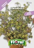 Sementi di piante aromatiche e officinali in bustina ad uso amatoriale (CORIANDOLO)