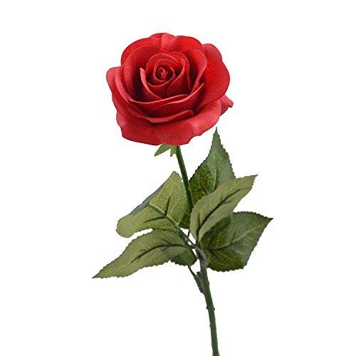 Single Rose: Amazon.co.uk