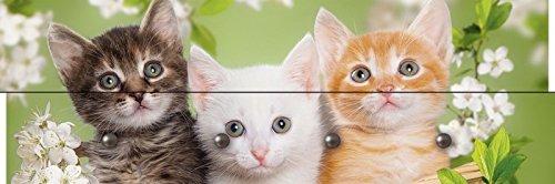 Artland Wand-Garderoben mit Motiv Holz-Paneele mit 4 Haken Mariya Zimarina 3 unterschiedlich farbige Katzen sitzen in einem Korb umgeben von Blume Tiere Haustiere Katze Foto Grün 30 x 90 x 2,8 cm C3PB (3-tier-korb)