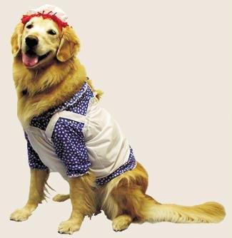 Halloween Kostüm Party Kleidung Festival Fasching Karneval Cosplay Fun Kostüm Haustier Pet Hunde Kostüm Raggedy Ann Haustier Kostüm für Hunde bis 65 (Ann Kostüm Halloween Raggedy)