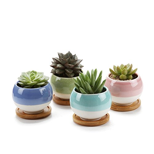 Rachel's 7.5cm forma della sfera succulento cactus pentole vegetali vasi di fiori fioriere contenitori scatole di finestra con vassoio di bambù collezione pacchetto di 4