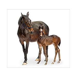 Papier peint photo motif n 137 chevaux trakehner 300 x - Papier peint chevaux pour chambre ...