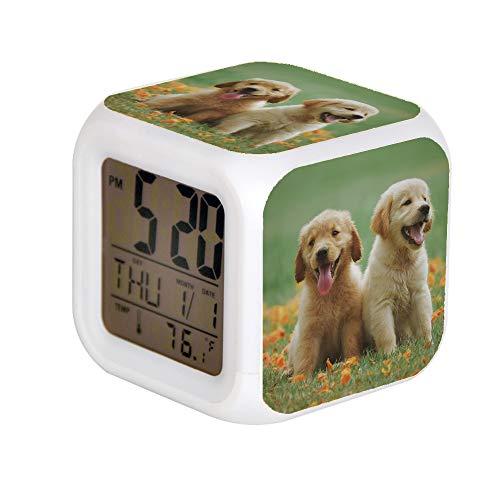 GIAPANO LED Alarm Colock 7 Farben Schreibtisch Gadget Alarm Digital Thermometer Nachtwürfel Helle Wohnkultur Zwei Gelbe Labrador Retriever Welpen -
