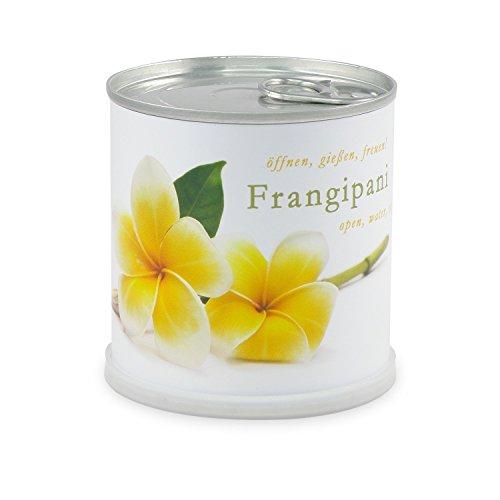 extragifts-fiori-in-lattina-frangipani