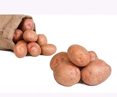 Preisvergleich Produktbild Kartoffeln Laura (Speisekartoffeln) 12, 5kg