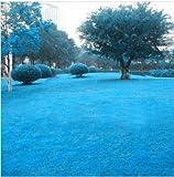 Keland Garten Grassamen Wunder-Rasen Nachsaat Samen mehrjährig, geeignet auch für Steingarten & Rabatten-Ränder (30, Blau)