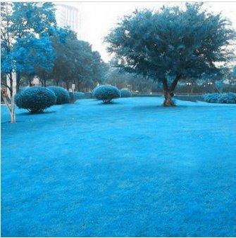 Keland Garten Grassamen Wunder-Rasen Samen Spiel + Sport, Nachsaat mehrjährig, geeignet auch für Steingarten & Rabatten-Ränder