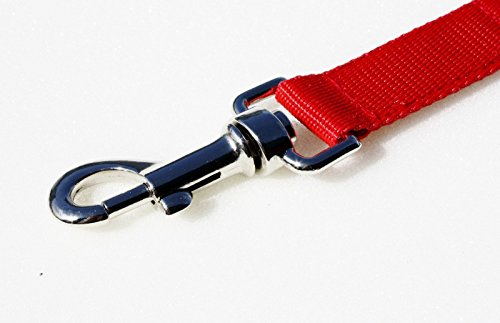 50ft-Red-Dog-Training-Lead