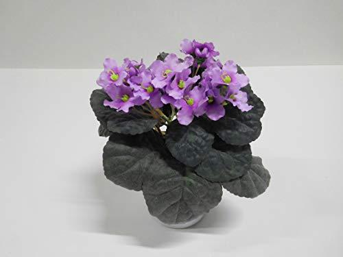Usambaraveilchen Fabenfrohe Blütenpracht