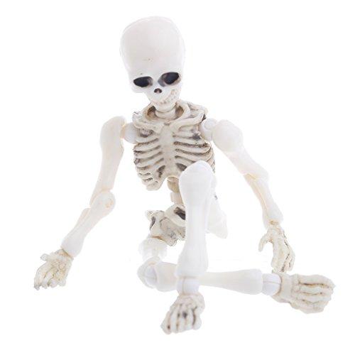 FXCO Beweglicher Herr Knochen Skelett Simuliert Knochen Menschliches Modell Schädel Ganzkörper Mini Figur Spielzeug