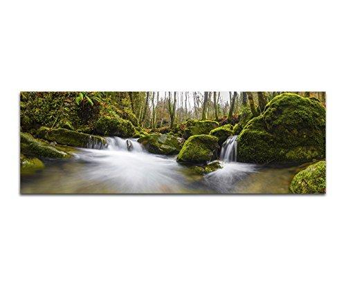 Paul Sinus Art Bilder Wand Bild - Kunstdruck 120x40cm Wald Steine Moos Waldbach Herbst