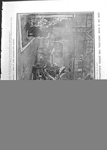 Stampi il Cavallo Russo che Determina il Polo Meadowbrook di Olimpia dell'Esposizione 1911 938RP2380911