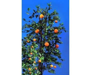 kunstpflanzen-discount.com Orangenbaum, Kunstbaum mit 40 Früchten und 1234 Blätter, Höhe 180cm – künstliche Bäume Kunstbaum