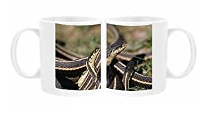 Mug Photo de Serpent Rouge-face porte-jarretelles-mâles (courting femelle (Petit) Grand)