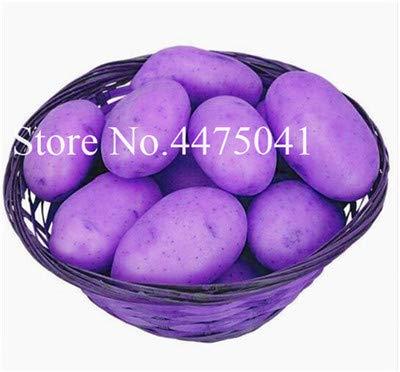Plentree Samen Paket: Hot Frische Bonsai 120Pcs Gemischte Kartoffel Bonsai Ernährung Grün Gemüse für Haus & amp; Garten ing Kartoffel Bonsai Absorbing: 2