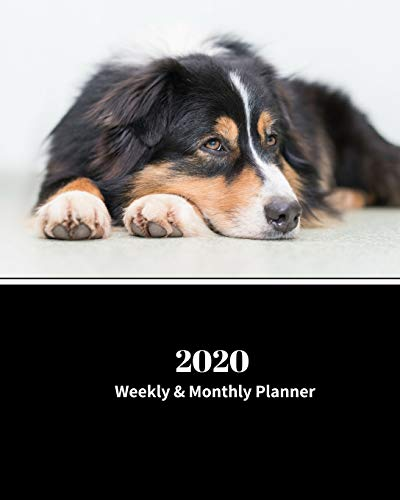 2020 Weekly and Monthly Planner: Monthly Calendar with U.S./UK/ Canadian/Christian/Jewish/Muslim Holidays- Calendar in Review/Notes 8 x 10 in.-Australian Shepherd Dog Breed