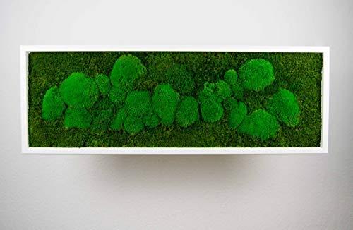Moosbild Pflanzenbild mit Kugelmoos und Flachmoos versch. Maße günstig (Weiß, 100x35 cm)