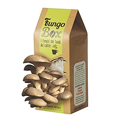 FungoBox: Kit for Growing Oyster Mushrooms at Home (Edible and Good), from Espresso Coffee Grounds, Ideal Gift from Upcycle Italia