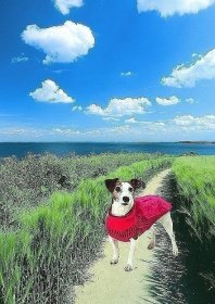Artikelbild: Karlie Hundepullover mit Regencape 32 cm, rot