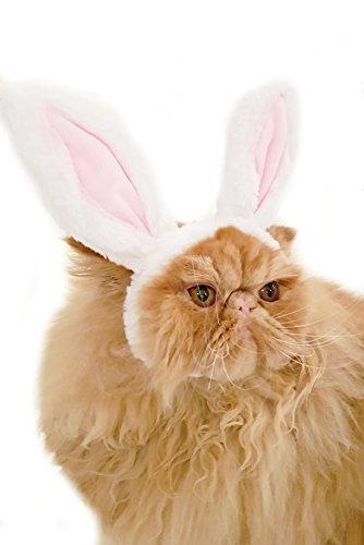 Liebenswürdig, kleiner Hund & Katze Ostern Bunny weiß & rosa Ohren Halloween klein Katze Hund Haarband Hat