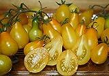 PLAT firm-semi di pomodoro giallo Pera 100 semi- pieni di gusto e pieno di vitamine