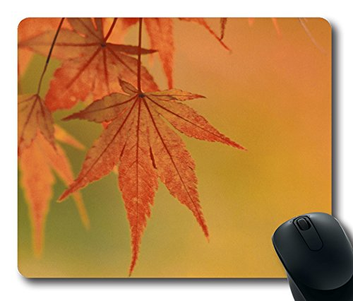 Preisvergleich Produktbild Maus Pad–Japanischer Ahorn Blätter fallen Farben Langlebig Office Zubehör Desktop Laptop Mousepad und Geschenke Gaming Maus Pads