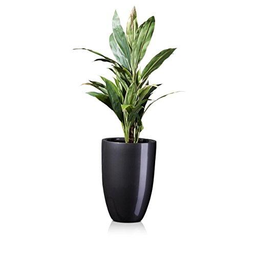 Pflanzkübel für innenräume | Was-Einkaufen.de