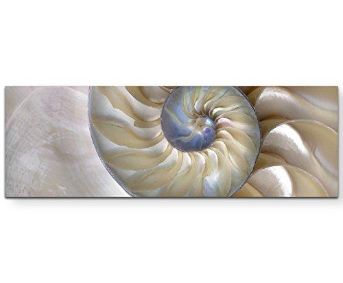Paul Sinus Art Leinwandbilder   Bilder Leinwand 120x40cm wunderschöne Nautilus-Muschel - Nahaufnahme (Bilder Muschel)