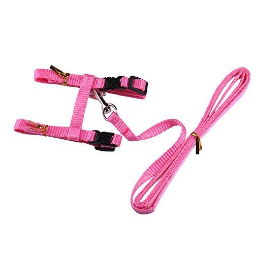 Einstellbares Katzen-Halsband aus strapazierfähigem Nylon, kleine Tierleine für Spaziergänge (Misc.)