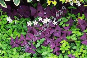 semences-de-lherbe-500-pcs-7-types-pelouse-vivace-semences-de-gazon-graines-plante-succulente-bonsai