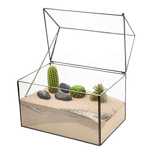 ox Style Clear Glass Terrarium Planters Geometrische Form Für Displays Hochzeiten Unique Centrepiece Oder Windows-Serien für Luftanlagen Fern Moss Succulents Indoor Garden ()