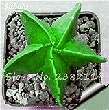 VISTARIC 12: Happy Farm Mini Cipolla dolce seme verdure biologiche Seed pianta interessante giardino domestico di DIY Bonsai Vasi di fiori Fioriere 100 Pz 12