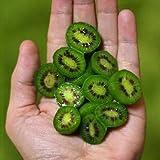 Las semillas de la variedad rara Nueva mini fruta de kiwi orgánicos, Paquete Profesional, 50 semillas / Paquete, sabroso dulce delicioso cubierta Bonsai # NF679