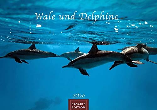 Wale und Delphine S 2020 35x24cm