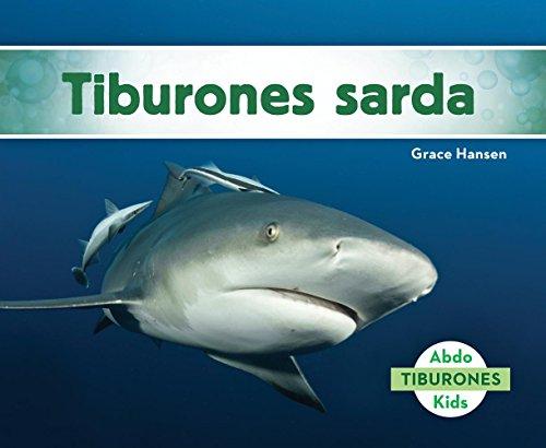 SPA-TIBURONES SARDA (BULL SHAR (Tiburones/ Sharks)