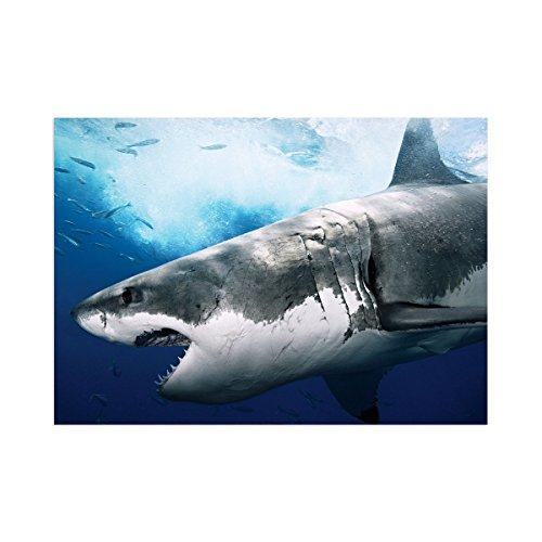 Monde de plong e 012 grand requin blanc poster affiche papier murale pop art d coration - Dessin de grand requin blanc ...