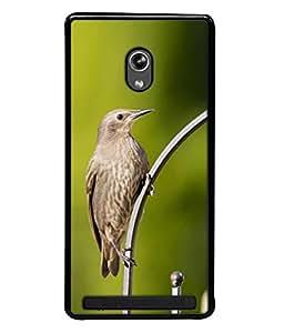 Fuson Designer Back Case Cover for Asus Zenfone 6 A600CG (flying bird cuckoo beautiful natural animal)