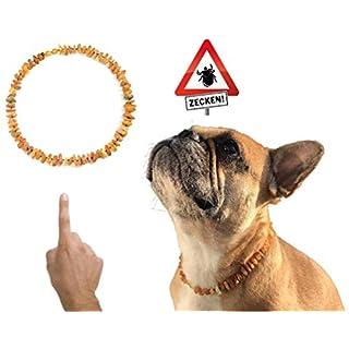 amberdog Bernsteinkette für Hunde gegen Zecken - Sonne Art.Nr.00528-XL Größe 53cm | Zecken? Zeckenschutz?