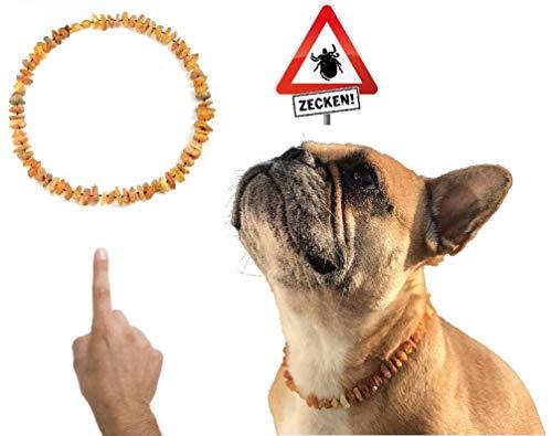 amberdog Hunde Bernsteinkette Sonne Art.Nr.00528-XL Größe 57cm | Zecken? Zeckenschutz?