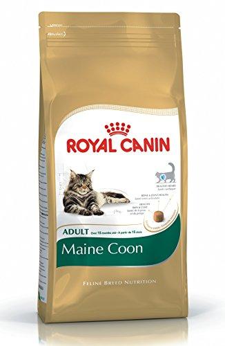 ROYAL CANIN Maine coon 31 secco gatto kg. 10 - Mangimi secchi per gatti