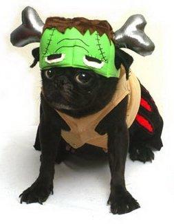 ter Hund Kostüm, BARKENSTEIN (Frankenstein) komplett mit einem silbernen Knochen Sweatshirt. Groß für Parteien und Süßes oder Saures! Größe 18