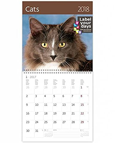CA01–17kalevan pallo Calendrier mural 2017Chats Exclusive Collection Calendrier mural 30x 30