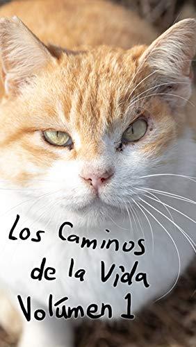 Los Caminos de la Vida: Los Gatos del Submundo de [My Studio]